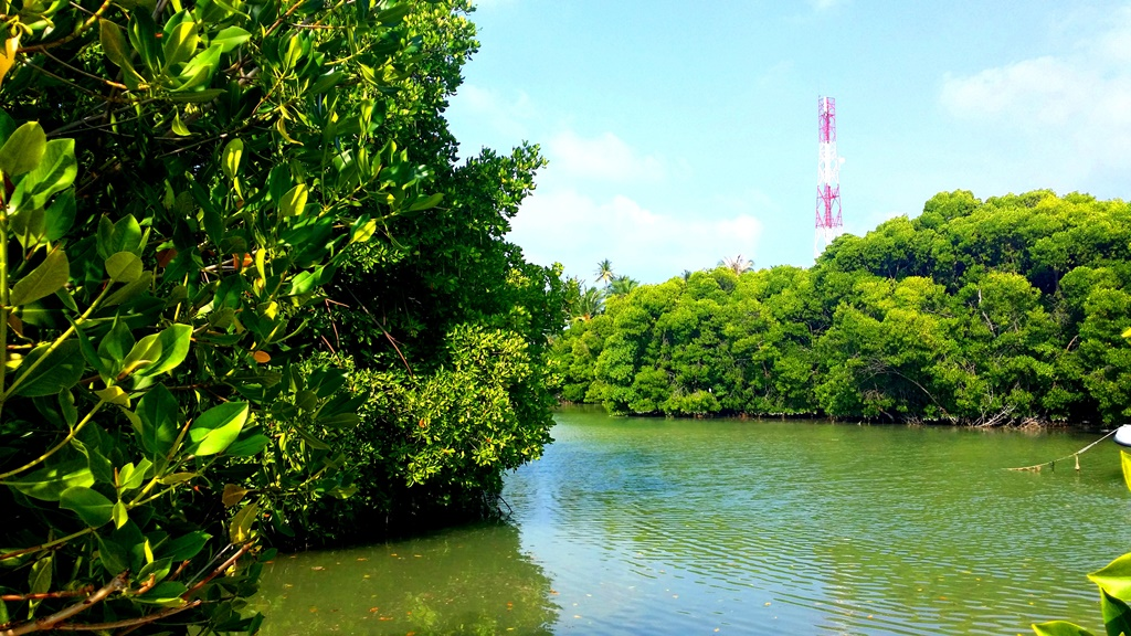 Assessment of mangroves from Goa, west coast India using DNA barcode