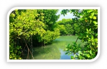 Huraa mangroves will undergo a biodiversity assessment & ecological valuation under a small grant facility project in MFF