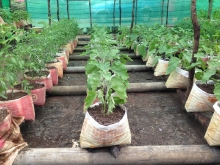 Climate-smart integrated vegetable farming