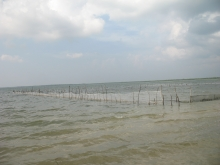 Sea weed culture site