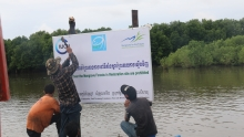 Installation of mangrove protection signboards champou khmao FACT2016