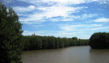 Mangroves in Viet Nam