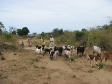 Goat farming and community