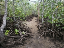 The proposed route for the Port Launay mangrove boardwalk in Mahe, Seychelles