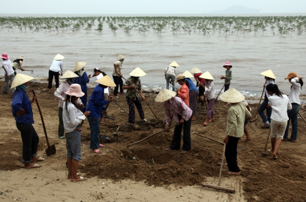 Da Loc commune in Thanh Hoa province village Green Teams clean the beach near a mangrove plantationViet Namsm Sren Rud