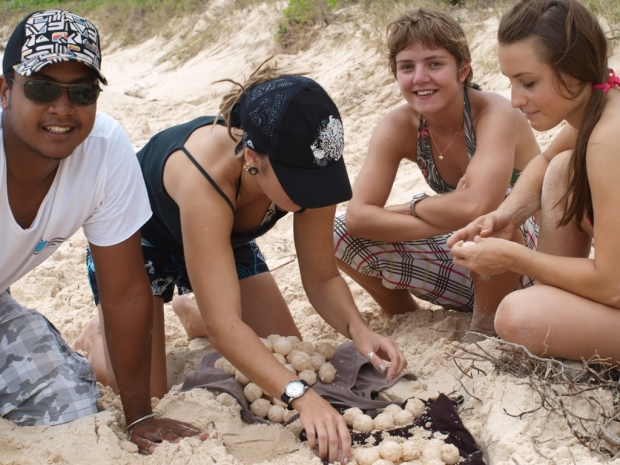 Turtle nest translocation