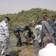 Pakistan Navy plants first mangrove sapling for the Pakistan Navy Mangrove Plantation Campaign