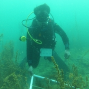 Seaweeds Survey