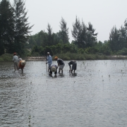 Local people planting mangroves
