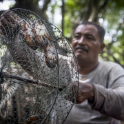 A Pu Dam community member checks his crab traps