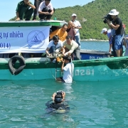 Releasing of marine turtle