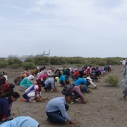 Students and participants plant mangroves near Port Qasim, Pakistan