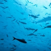 A school of fish in the Indian Ocean