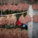 Onion harvest drying