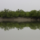 Inside the Indian Sundarban Tiger Reserve at high tide