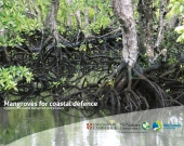 Mangroves for Coastal Defence guidebook cover by TNC and Wetlands International.