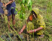 Women partake in mangrove plantation