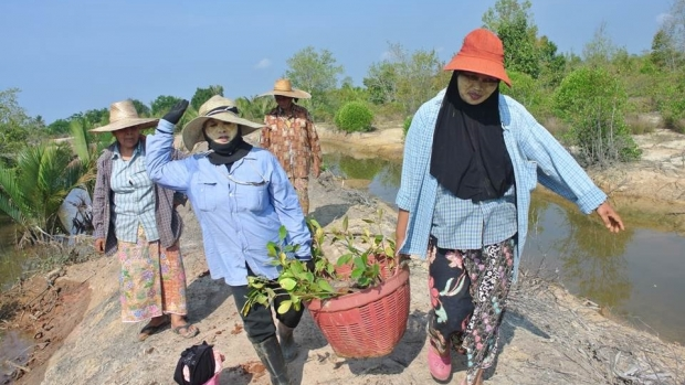 Activity on mangrove conservation.