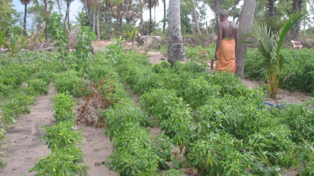 Promotion Of Cultivating Vegetables Fruits Yams And Leaves In Home Garden Level Among Household Women Community Living In Kalawanchikudi Coastal Belt Area Of Batticaloa District Of Sri Lanka Mangroves For The