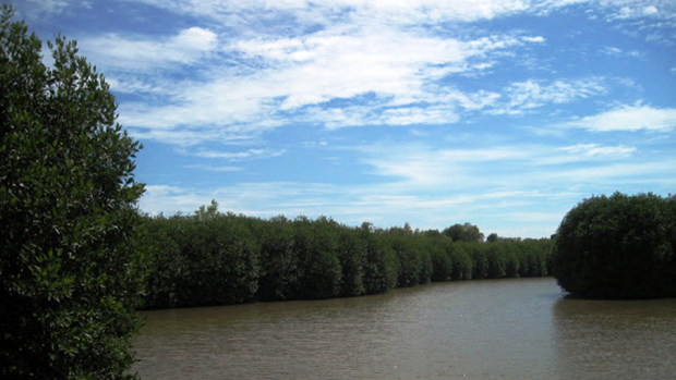 Integrated mangrove-shrimp farming plays a key role in sustainable aquaculture in Viet Nam