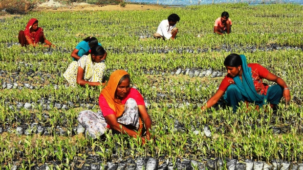 Women and Youth working at Arambda nursery