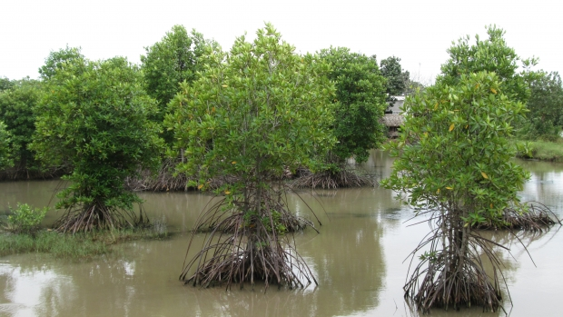 Shrimp mangrove polyculture at Long Khanh and Dong Hai Commune