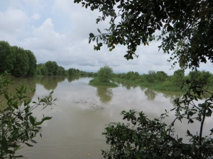 Mangroves in Long Khanh Commune, Duyen Hai District, Tra Vinh Province, Vietnam