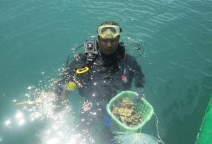 A local fisherman diver prepares to transplant corals in Bai Huong.