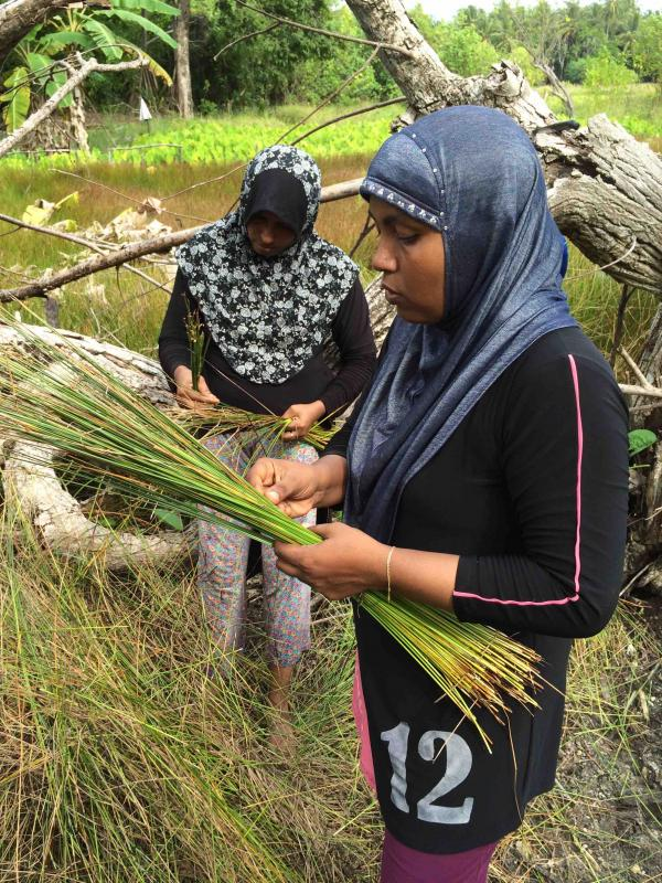 Leena-collecting-reeds-from-the-nearby-marshland2.-Aishath-Niyaz