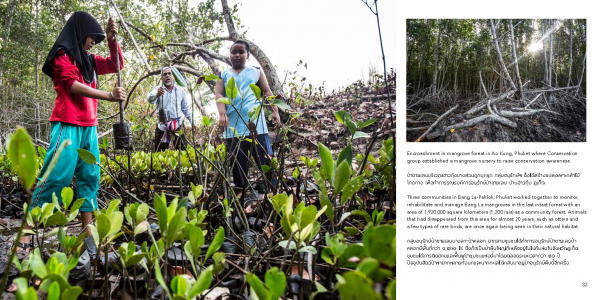 importance of mangrove ecosystem essay Mangroves and depend on their ecosystem services the conservation and  restoration of mangroves is thus an important contribution to the achievement of  the.